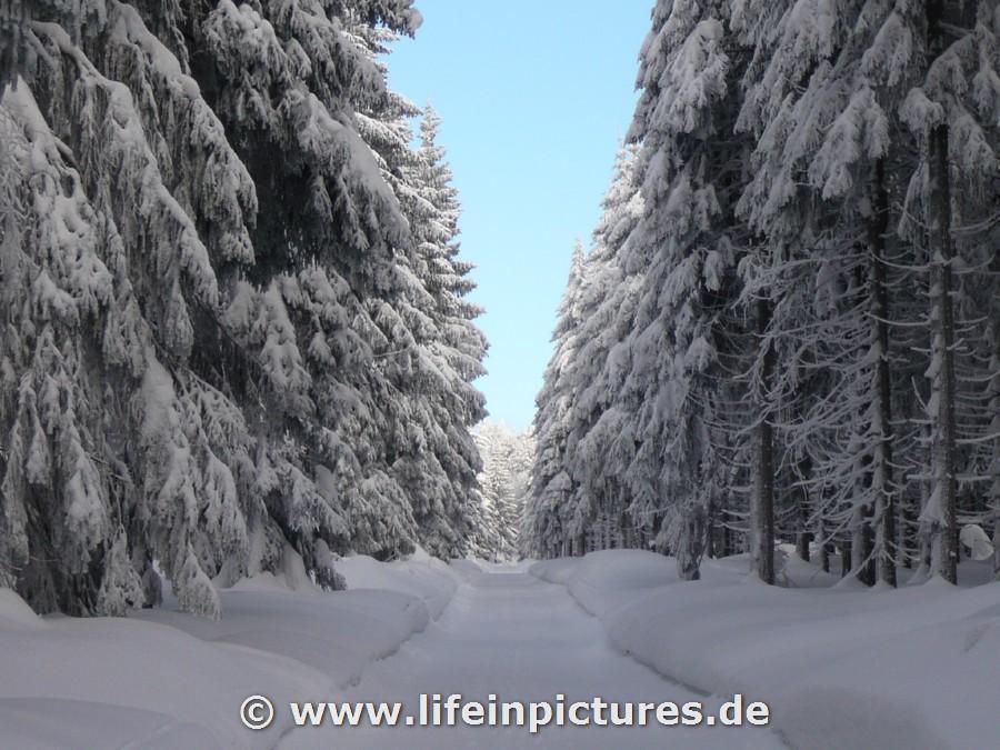 thüringer wald schneehöhen