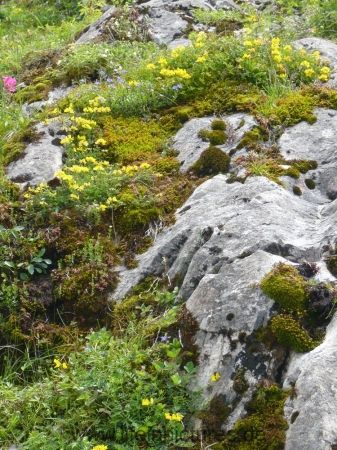berchtesgaden-juni-12-062
