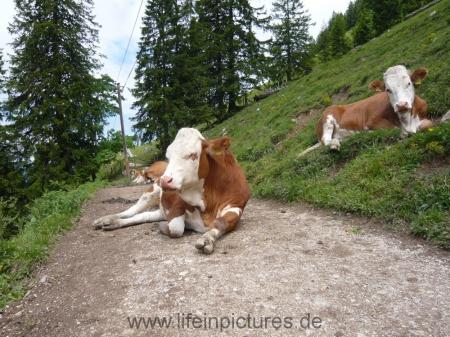 berchtesgaden-juni-12-066