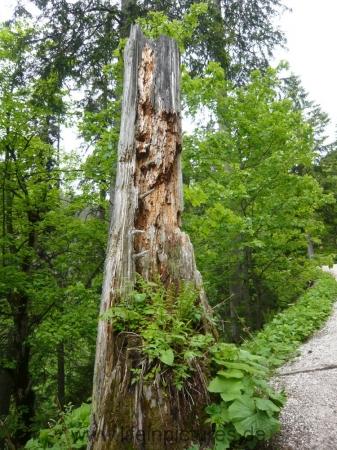 berchtesgaden-juni-12-068
