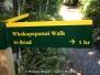Whakapapanui Walk