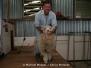 Wir besuchen eine Schaffarm